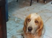 Un perrito allegado