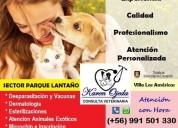 Consulta veterinaria karen ojeda