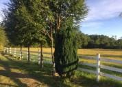 Venta de parcelas en villarrica ix region araucania villarrica