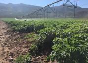 Sistema riego pivote valley para 100 hectareas chillan