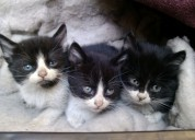 Gatitos regalones buscan un hogar sicero