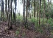 Sitios rodeados de naturaleza, sector nonguen.