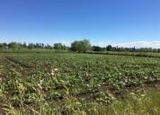 Se venden parcelas sector selva negra quiriquina san ignacio