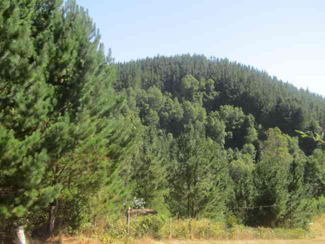 Se vende terreno en Pumalal/Temuco