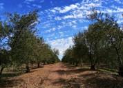 Fundo agrícola a orilla de carretera, 61 hectareas