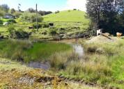 Campo de 140 hectáreas en chiloé