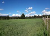 Vendo tierras agricolas en coihueco subdivididas