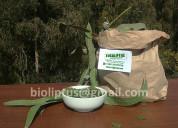 Eucalipto y cipres fresco oferta pack $600 mayoris