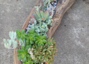 Flores naturales en tronco. desde $1.0000.-