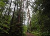 Bosque de pino de 19 años