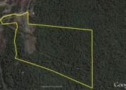 Venta terreno con bosque nativo