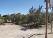 Venta de terreno con olivos-galpón y cabaña