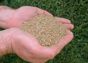 Venta de semillas para jardines