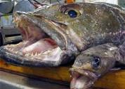 Vendo permiso artesanal para el bacalao de profund