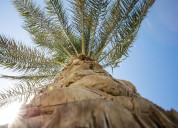 Árboles y palmeras - vivero online multiplant