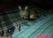 Hermoso gatito encontrado