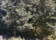 Campo forestal agrícola 30 hectáreas